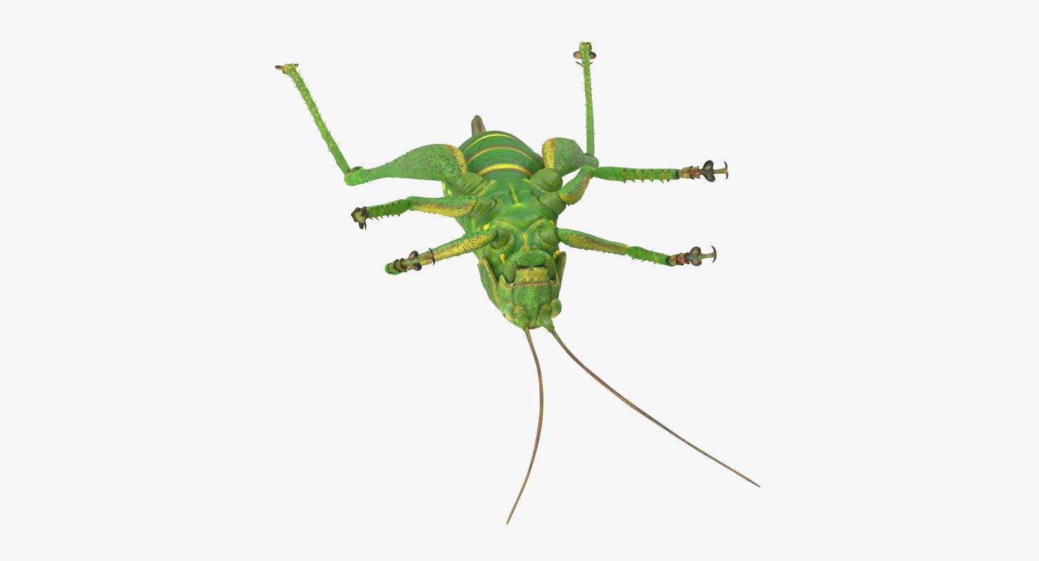 Grasshopper_Dead_03_001_Thumbnail_0000.jpg