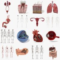 3d anatomy human model