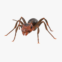 3d rigged ant -