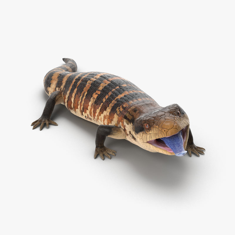 Blue Tongued Skink Rigged 3d model 01.jpg