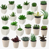 23 succulents 3d model