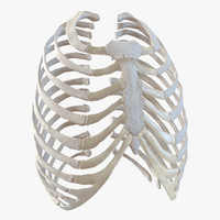 female ribcage skeleton 3d 3ds
