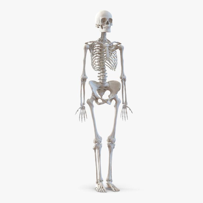 Human Female Skeleton 3d model 01.jpg