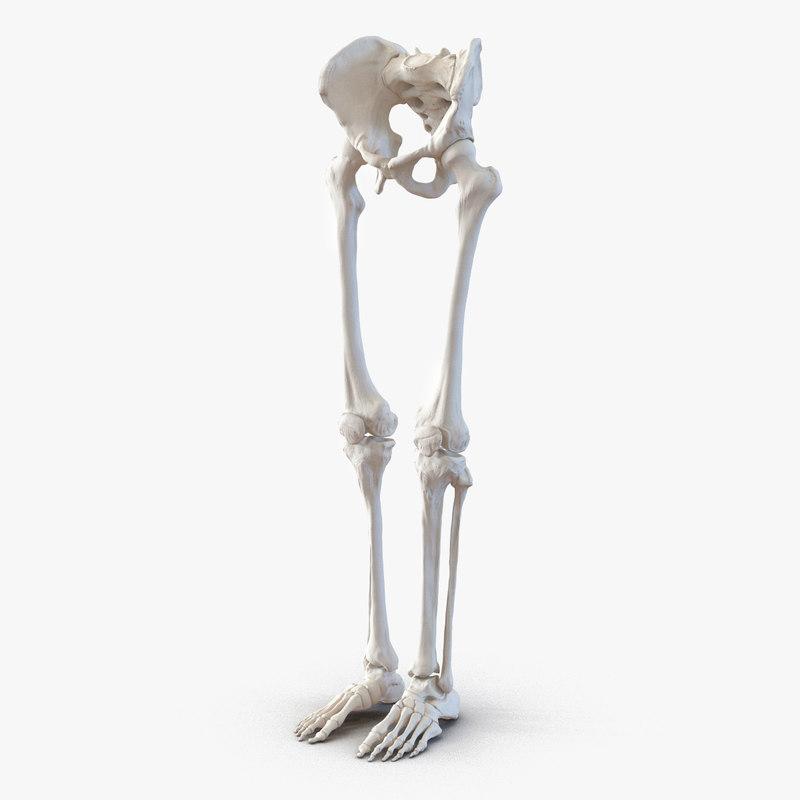 Human Male Lower Body Skeleton 3d model 01.jpg