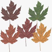maple leaf 01 3d max