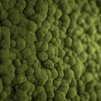 3d moss maps