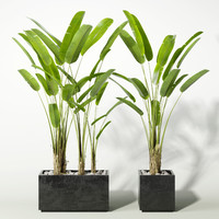 3d palm model