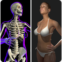 rigged x-ray skeleton female 3d model