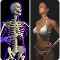 rigged x-ray skeleton female 3d model
