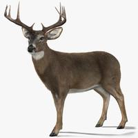 deer 2 fur 3d model