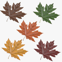 3d model maple leafs 05