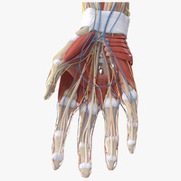 max human hand