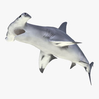 3ds great hammerhead shark pose