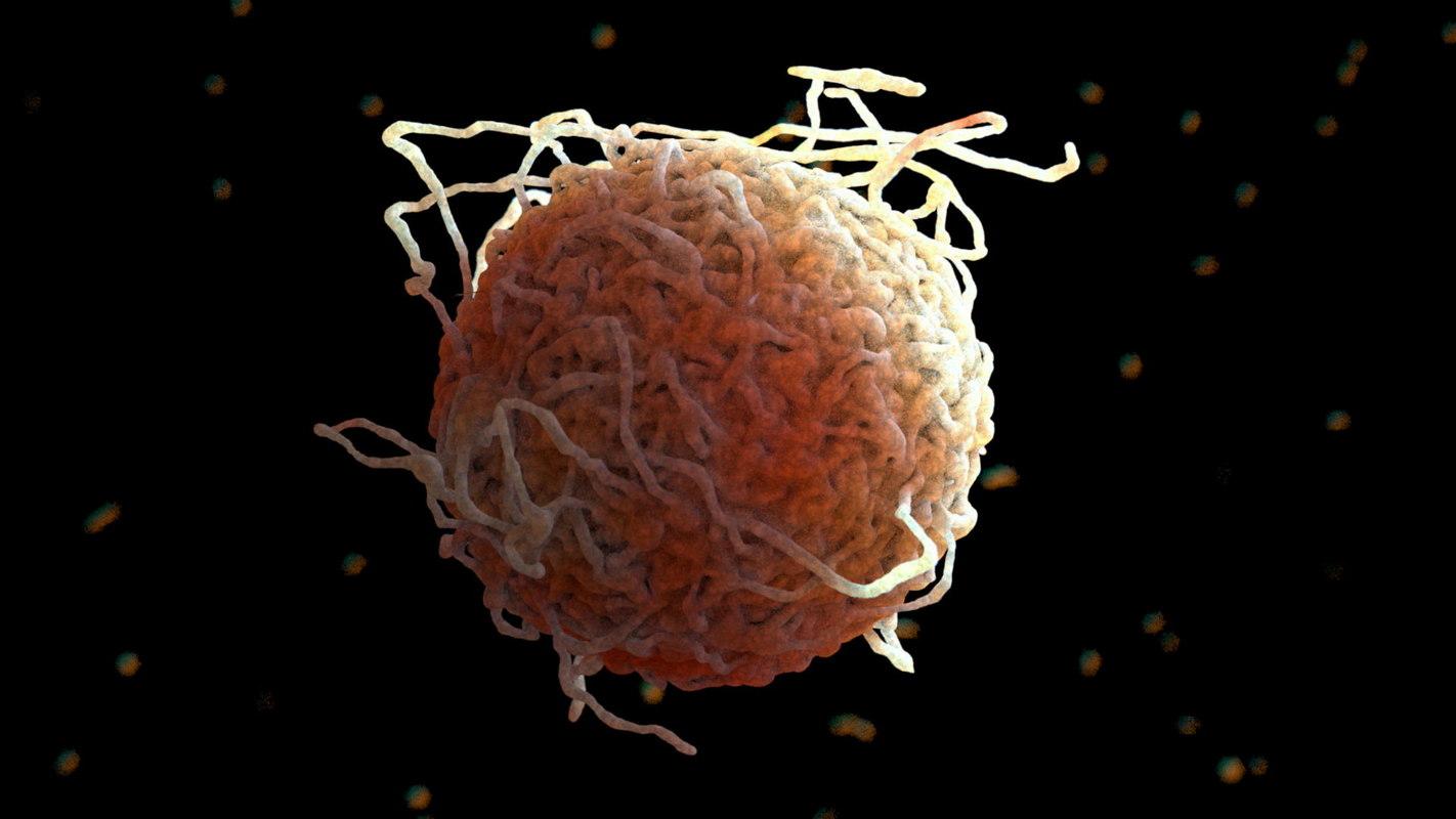 Immunecell003.jpg
