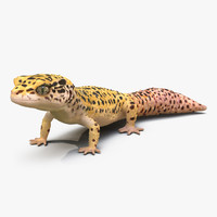 3ds leopard gecko pose 2