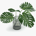 monstera plant 3D models