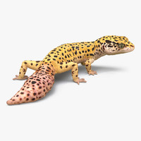 3d model leopard gecko pose 4