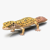 3ds leopard gecko