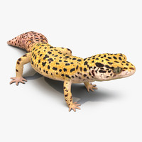 leopard gecko rigged 3d model