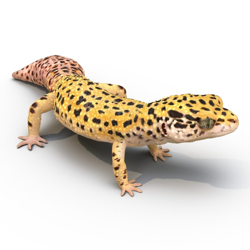 Leopard Gecko Rigged 3d model 02.jpg