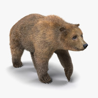 3d brown bear fur pose
