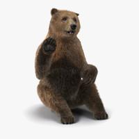 3d brown bear fur pose model