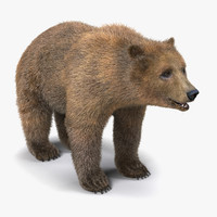 3d brown bear fur model