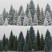 20 picea pungens trees 3d max
