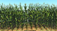 3d corns