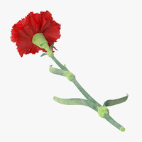 3d c4d single laying carnation -