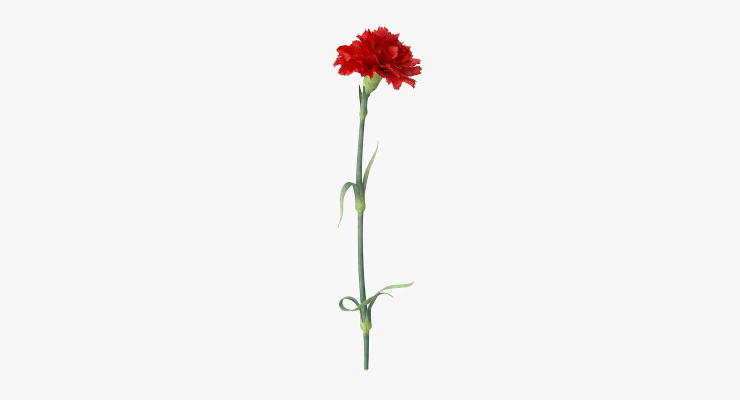 Carnation_Standing_001_Thumbnail_0000.jpg