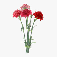 carnation bouquet - 3d model