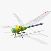 3d dragonfly wings model