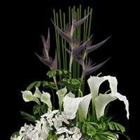 3d exotic arrangement model