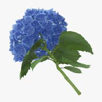 3d model single laying hydrangea -