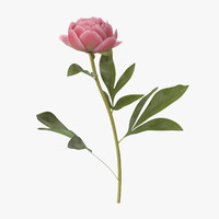 single standing peony - 3d max