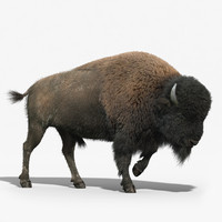 max american bison fur rigged
