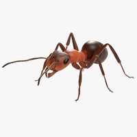 3d ant insect model