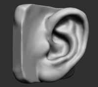 3d ear ztl stl