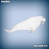 3d model base mesh walrus