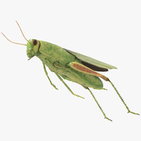 3d rigged grasshopper model