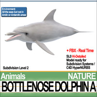 3d bottlenose dolphin model