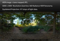 FOREST PATH FROM UNDER AN OAK TREE, 360 PANORAMA #510