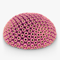astreopora coral pink animation 3d model