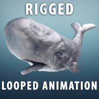 3d obj sperm whale moby