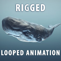 3d sperm whale