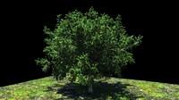 3d model res tree
