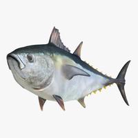 tuna fish pose 2 3d model