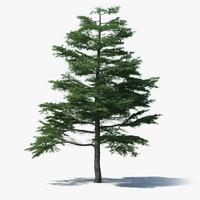 3d model scan pine tree