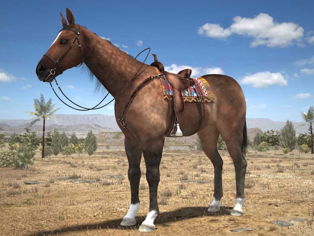 Horse_0000.jpg